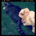 Josie mit Freundin Kitty