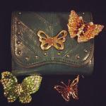 Ein paar Mitglieder meiner Schmetterlingsfamilie