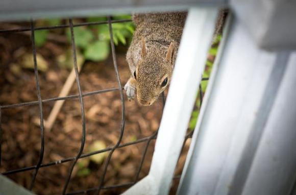 Eichhörnchen im Central Park