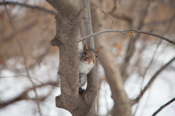 Winter Wonderland im Central Park (und Schneechaos im restlichen Manhattan)