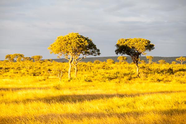 Auf der Suche nach den Big Five im Krüger Nationalpark