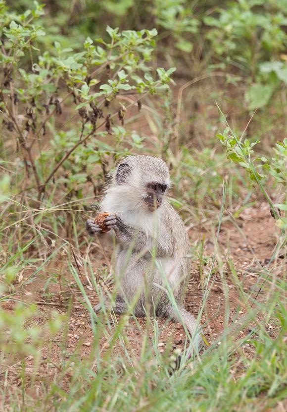 Unsere Safari im Krüger Nationalpark