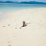 Hund Strand Thailand