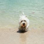 Rang Yai Island Hund