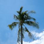 Rang Yai Island Palm Tree