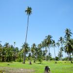 Rang Yai Island Palmen