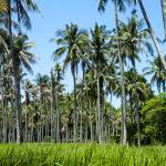 Rang Yai Island Palmen Phuket