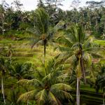 Reisterrassen Bali