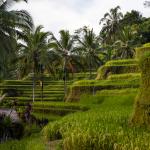 Terrassen Reis Bali