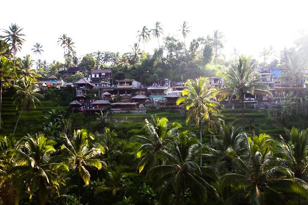 Reisterrassen Tegallalang Bali Ubud-9