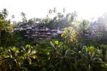 Paddy Fields Ubud Bali