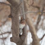 Eichhörnchen Schnee Central Park