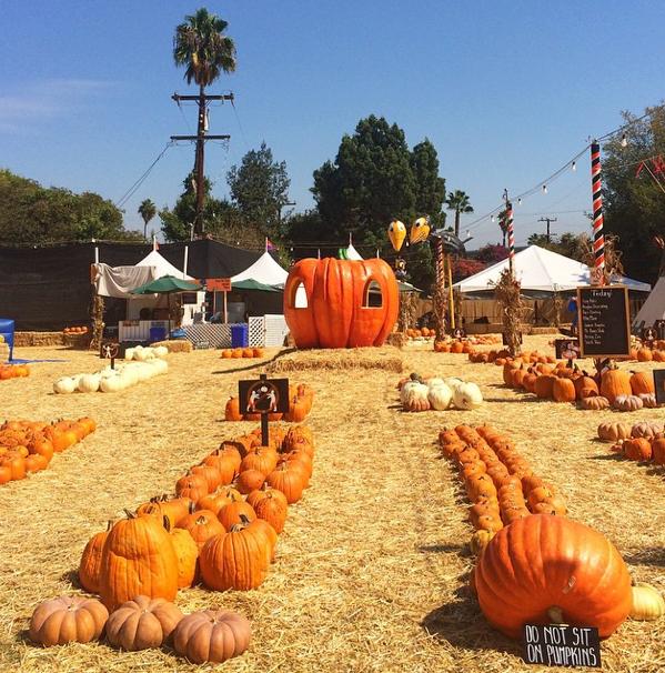 Kürbis-Shopping in Hollywood bei Mr. Bones Pumpkin Patch