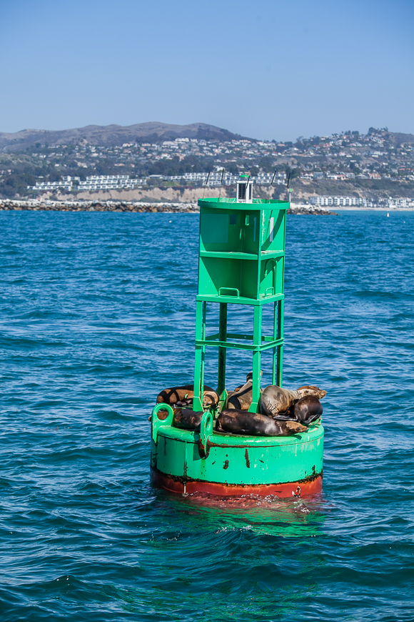 Dana Point: Mein Geheimtipp in Orange County