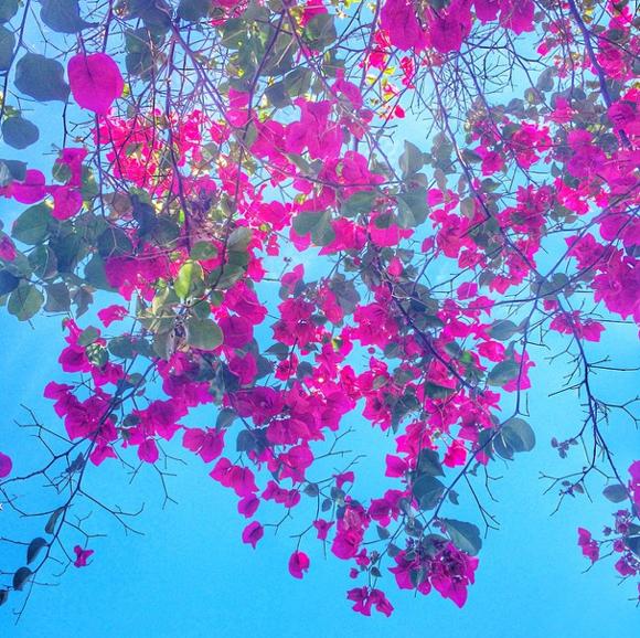 Die Farben Kaliforniens