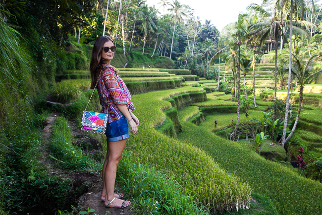 Reisterrassen Tegallalang Bali