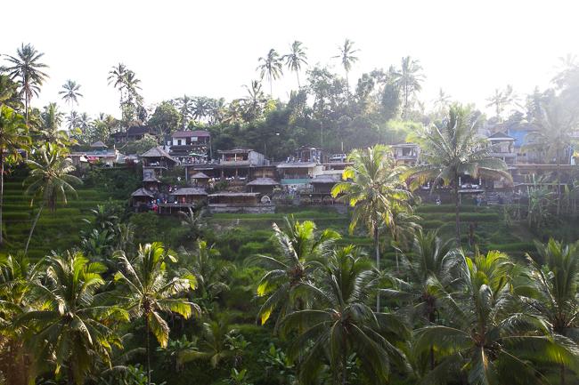 Reisterrassen Tegallalang Ubud Bali