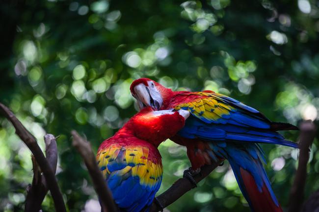 Ein Besuch im Bird Sanctuary in Playa del Carmen