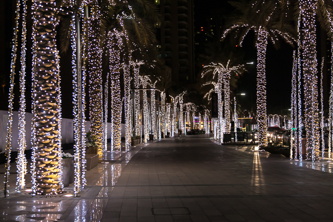 Palm Trees Lights Dubai
