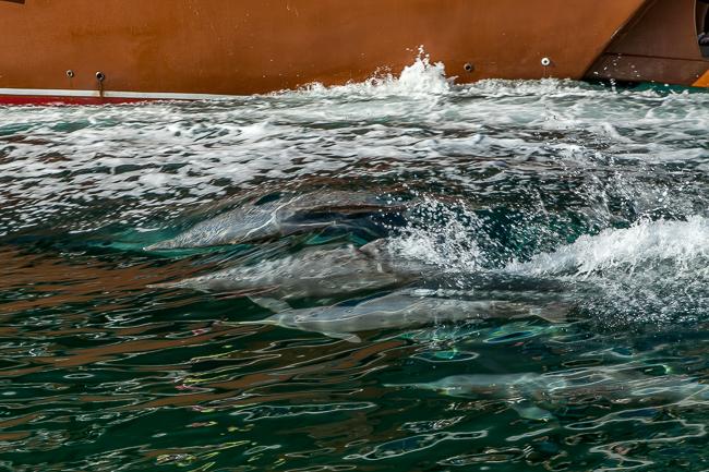 Delfine Oman