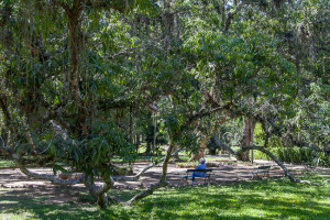 Rio de Janeiro Botanischer Garten