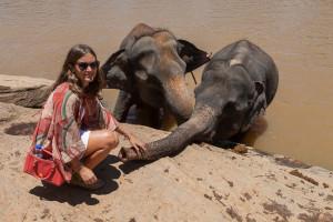 Elefanten Waisenhaus Sri Lanka