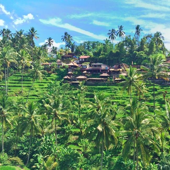 paddy-fields-bali