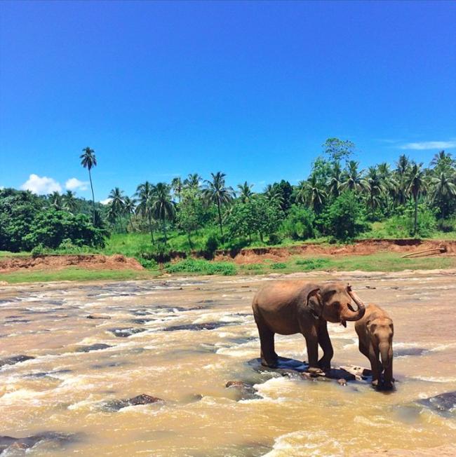 Pinnawala Elefanten baden Sri Lanka