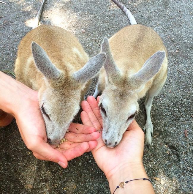 Neue Freunde in Australien