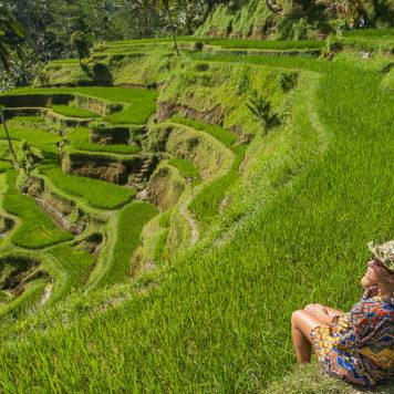 Bali Reisterrassen Ubud
