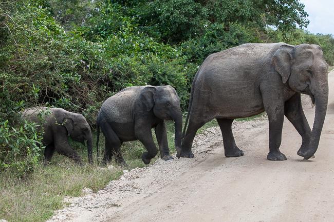 Unsere Sri Lanka Rundreise - Von Negombo über Kandy und den Yala Nationalpark nach Dikwella