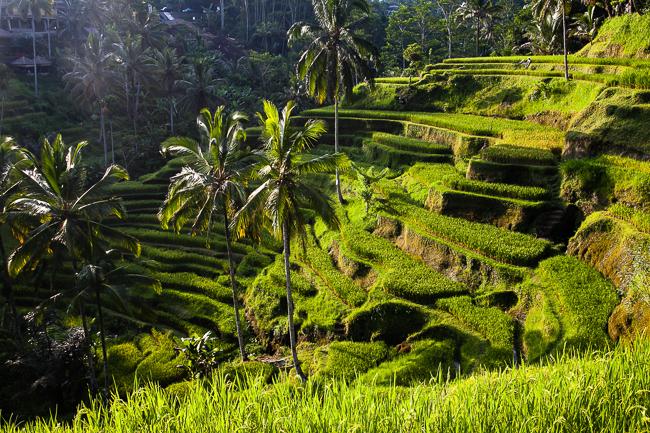 Tipps und Tricks für eine Bali-Reise
