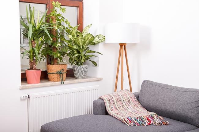New In: Pflanzen in unserer Wohnung