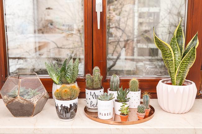 new in pflanzen in unserer wohnung josie loves. Black Bedroom Furniture Sets. Home Design Ideas