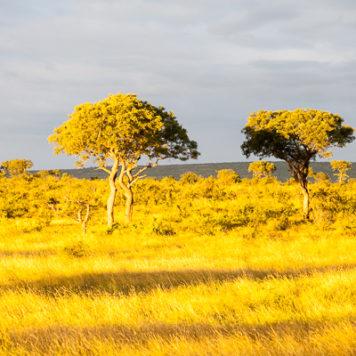 Krüger National Park Steppe Licht