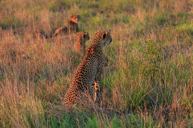 Tipps für eine Safari im Krüger Nationalpark in Südafrika