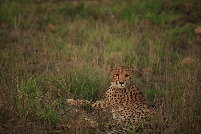 Josieloves_Safari-0718