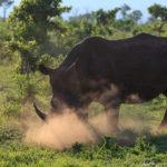 Safari Impressionen