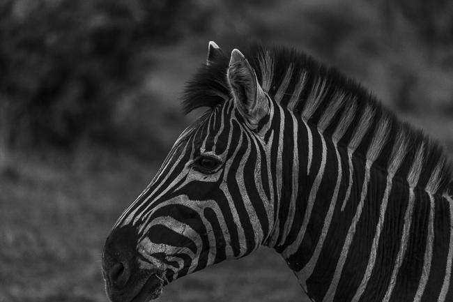 Josieloves_Safari-1516