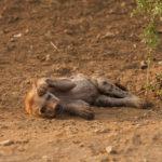 Südafrika Tiere