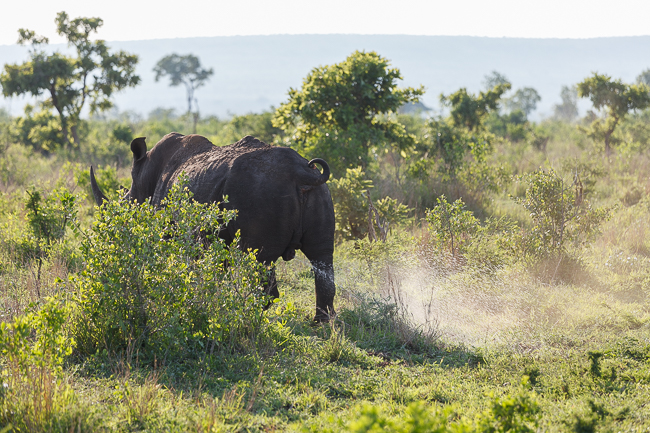 Erste Safari Impressionen