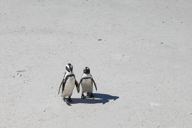 Südafrikas Tierwelt