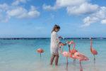 Flamingos am Strand Aruba Karibik