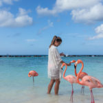 Flamingos am Strand Aruba Karibik