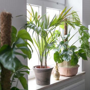 die sch nsten dekospiegel ananas sonnen und kakteen f r unsere w nde josie loves. Black Bedroom Furniture Sets. Home Design Ideas
