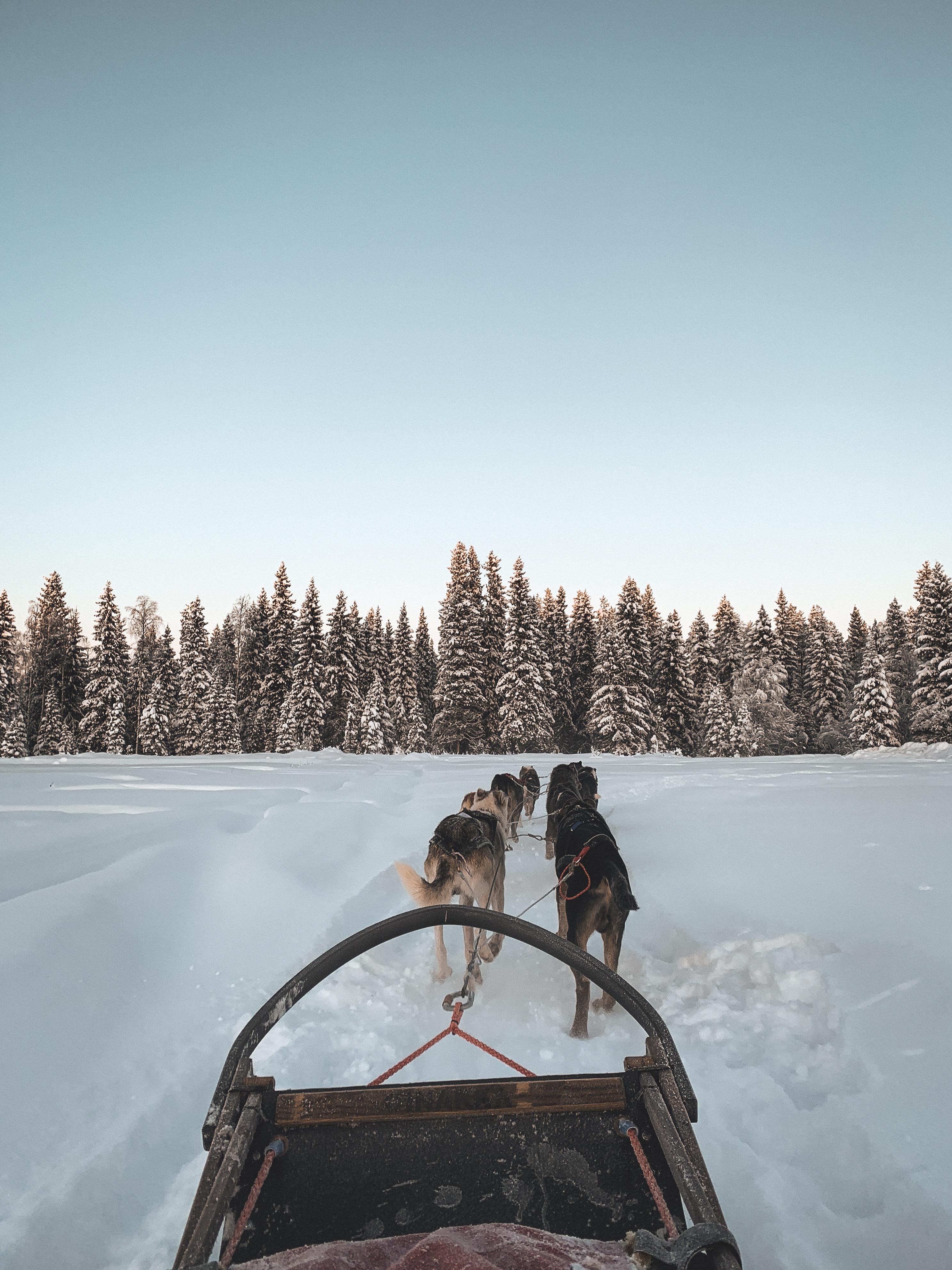 Lappland Hundeschlittenfahrt