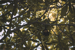 Fledermaus hängt im Baum