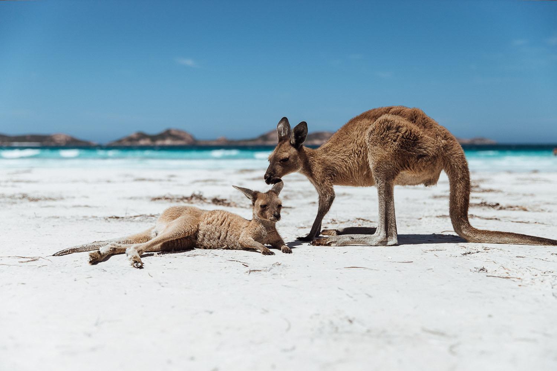 Australiens Tierwelt ist ein Traum!