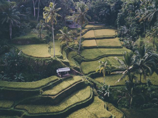 Tipps für eine Bali Reise