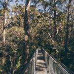 Westaustralien Roadtrip von Perth über Rottnest Island, Margaret River, Denmark, Albany und Bremer Bay nach Esperance